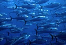 metales pesados peces